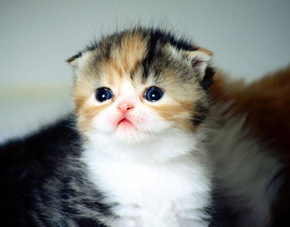 17-cutest-kittens-ever-photographed-in-the-world-6