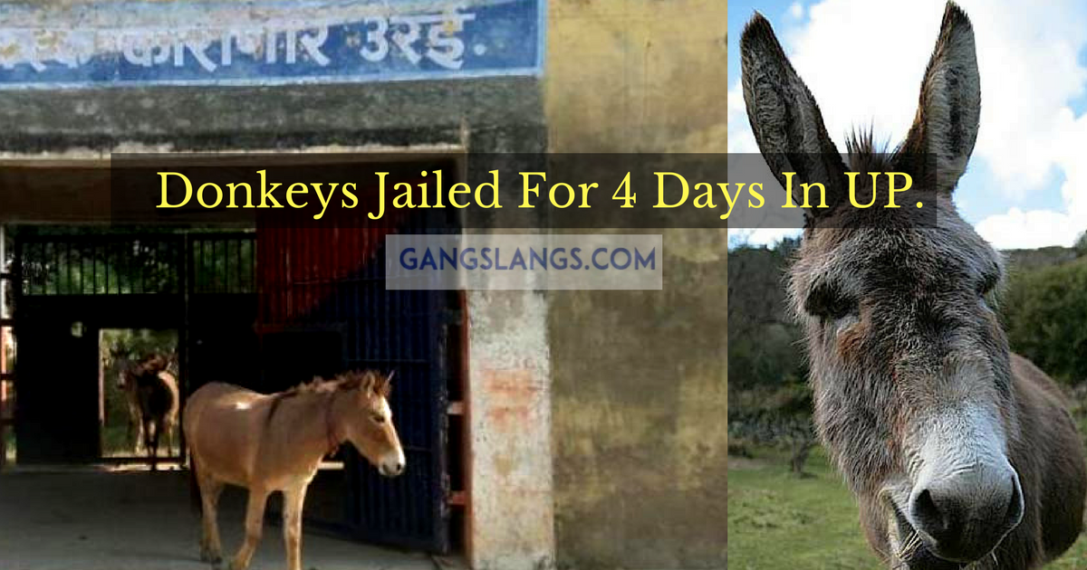 Donkeys Jailed For 4 Days.